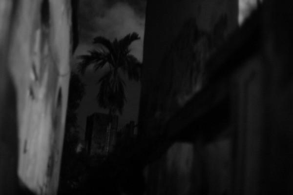 Palm-night