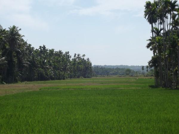 Arka-Mukhopadhyay-poem-image