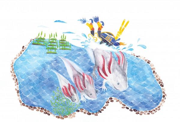 2-axolotl1