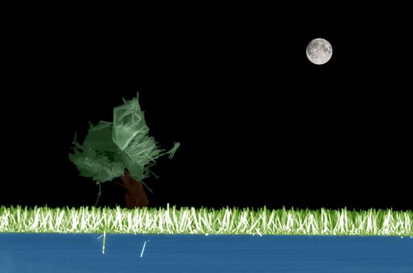 3_Nano-Grass-Field_-a-night-view