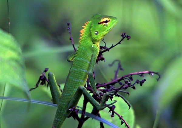 10_Lizard