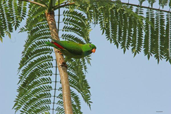 2_Parrot