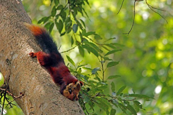6_Squirrel-2